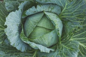 Cabbage juice health benefits